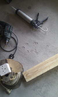 fox prints in  our screed